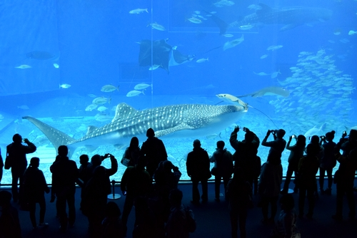 261222 美ら海水族館14