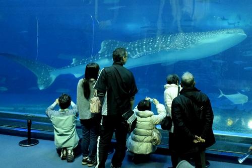 261222 美ら海水族館15