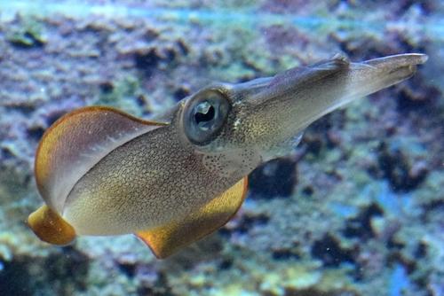 261222 美ら海水族館11