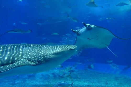 261222 美ら海水族館16