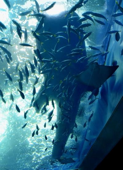 261222 美ら海水族館17