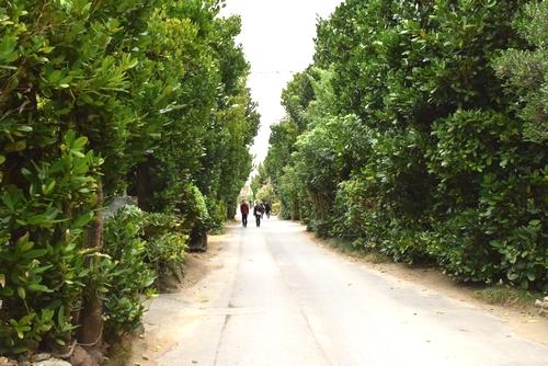 261222 フク木並木3