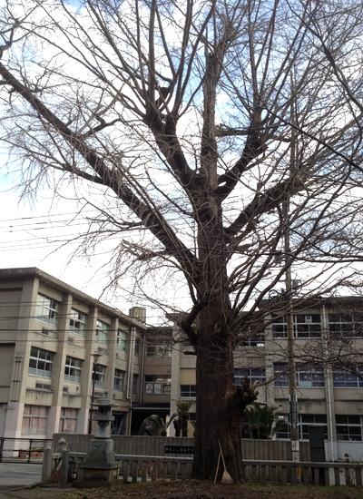 270104 須佐神社13