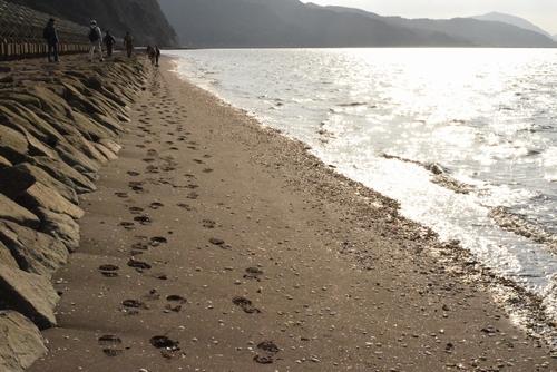 270131 海岸歩き7