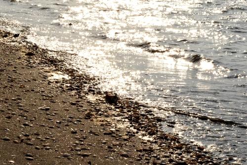 270131 海岸歩き8