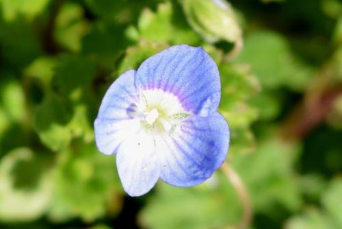 270213 野の花3