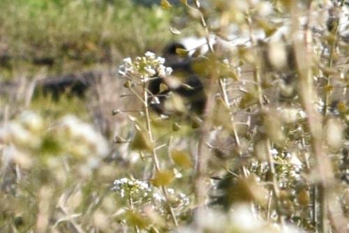 270213 野の花6