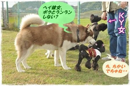 大型犬茶色ハスキー&リアン2