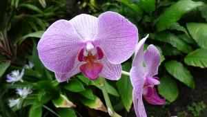 フォスター植物園の温室で見た美しい花