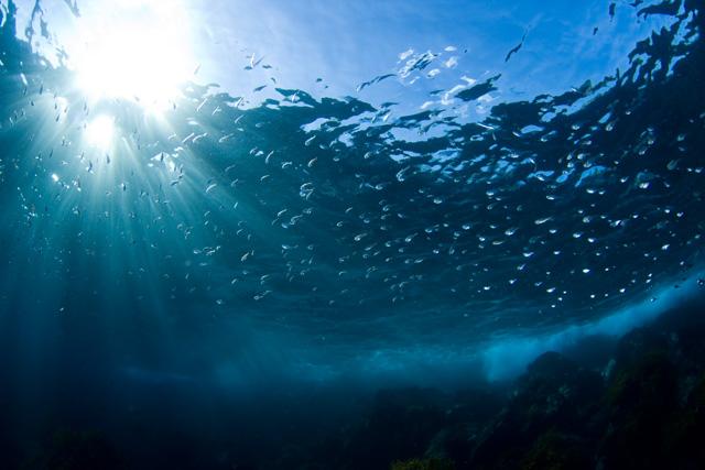 伊豆海洋公園のミナミハタンポの群れ