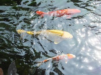 otaguro-ogikubo-park8.jpg