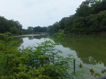 zenpukuji-park28.jpg