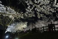 BL180331打上桜ライトアップ1IMG_2198