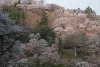 BL180402吉野山2-1IMG_0669