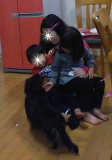 ブログ2 0103犬 (2)