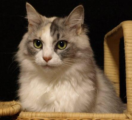 かご猫マロン姫