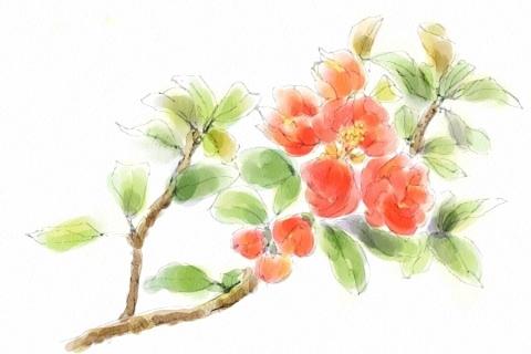 ぼけの花1