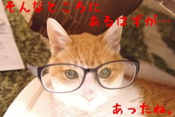 4_20150221002446fcf.jpg
