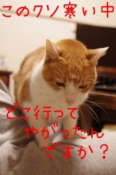 IMGP0746.jpg
