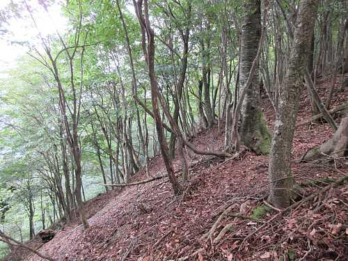 #MG_0427 遠方から見る三角錐の刈又山、山頂付近の急こう配の林