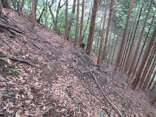 #MG_0438旧坂の植林地を下ります
