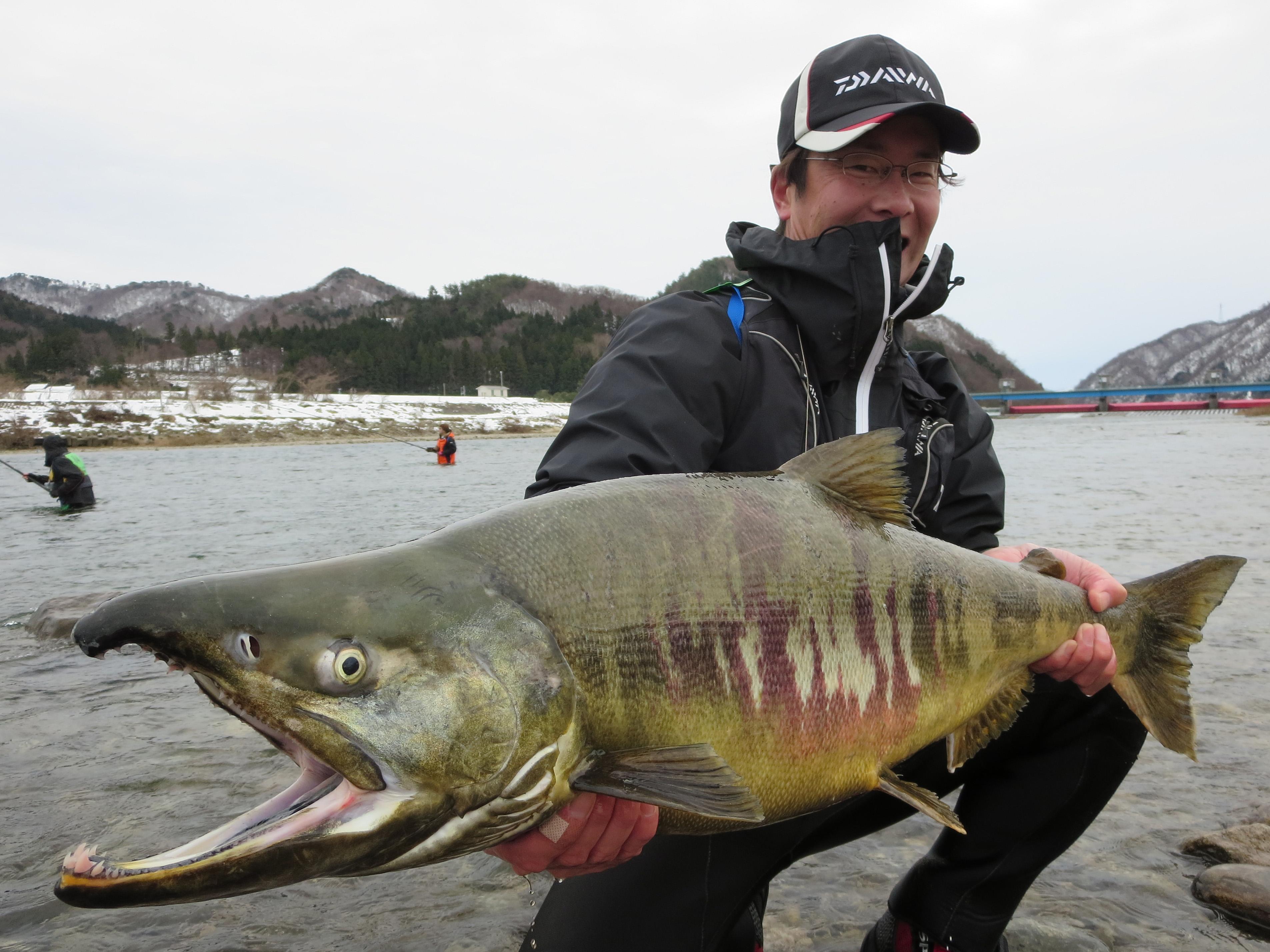 荒川鮭釣り2014 新潟村上