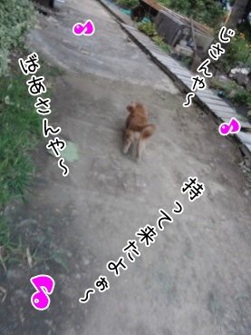 kinako3067.jpg