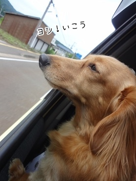 kinako3084.jpg