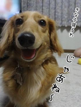 kinako3100.jpg