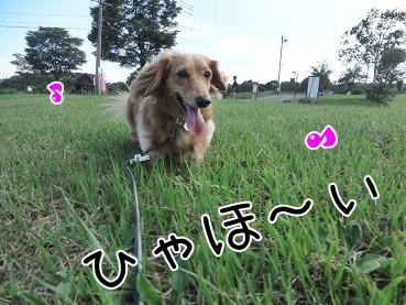 kinako3110.jpg