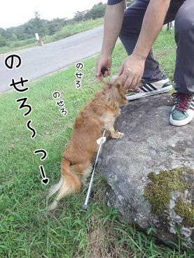 kinako3112.jpg