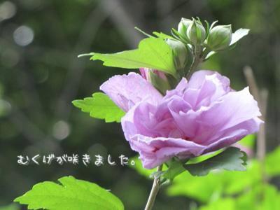 th_IMG_0812no4.jpg