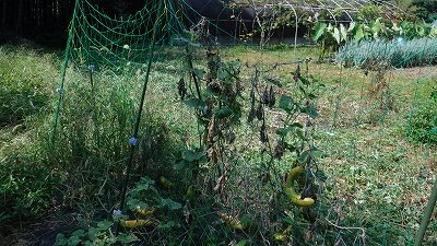 2015.8.15菜園15