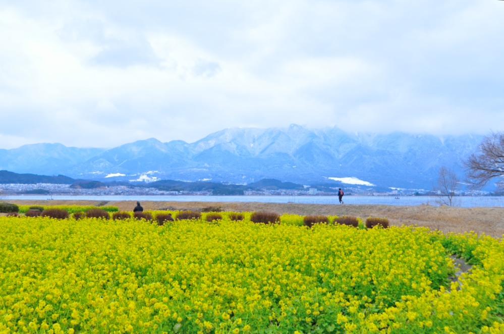 _比良山と菜の花DSC_0015