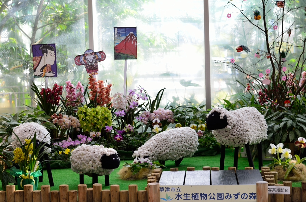 _水生植物園DSC_0122