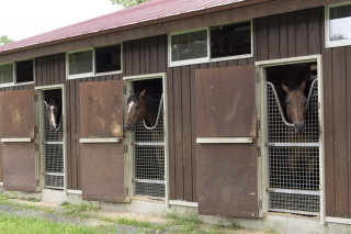 他にも多くの馬が余生を送る地
