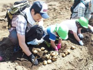 第二芋掘り