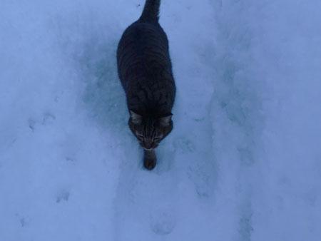 べたべたの雪2