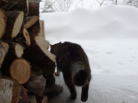 30 朝からずーーっと雪、雪1