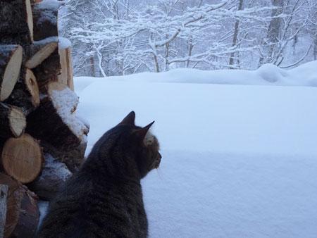 またまた、大雪3