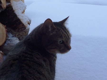 またまた、大雪4