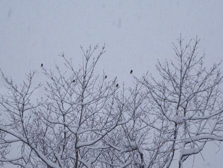 またまた、大雪1