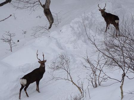 牡鹿たち2