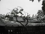 猿田彦神社(伊勢)26