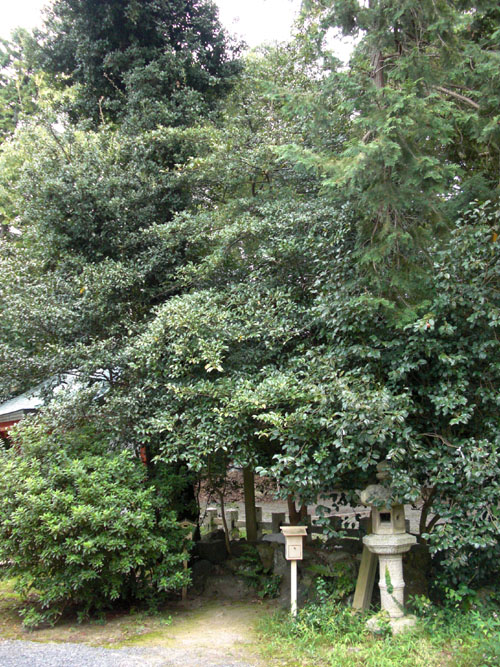 宇治神社26