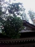 丹生神社(三重)19