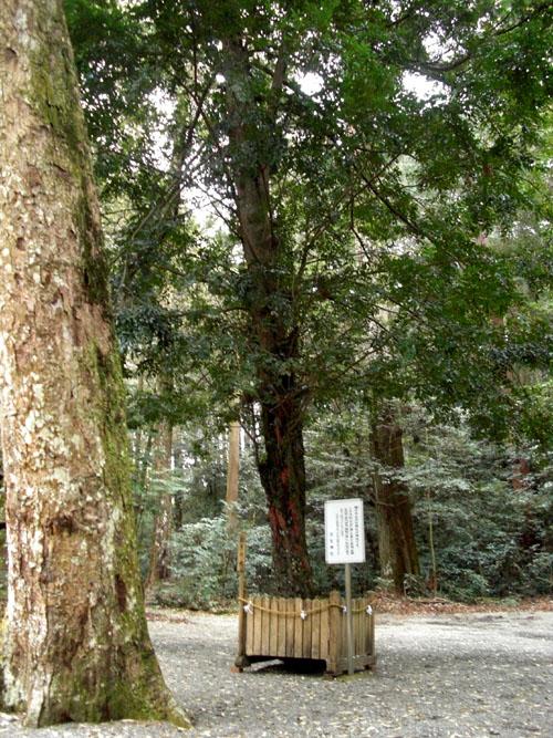 丹生中神社11