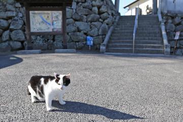 城のうらにもネコたち