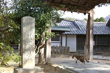 松陰神社のねこ