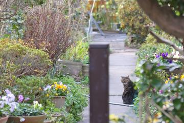 萩のおたくにネコさん
